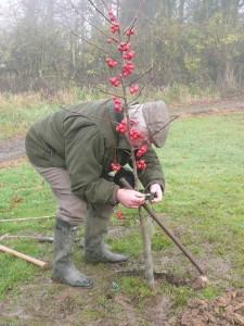 Planting of Memorial Tree